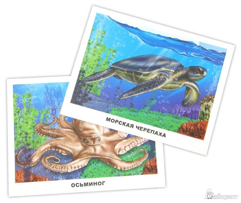 Иллюстрация 1 из 26 для Обитатели морей и океанов. Обучающие карточки | Лабиринт - книги. Источник: Лабиринт