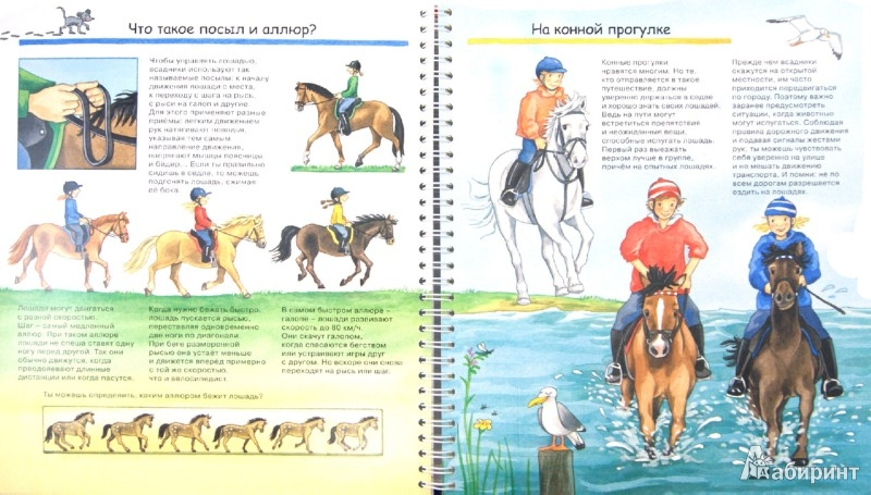 Иллюстрация 1 из 21 для Лошади и пони - Андреа Эрне | Лабиринт - книги. Источник: Лабиринт