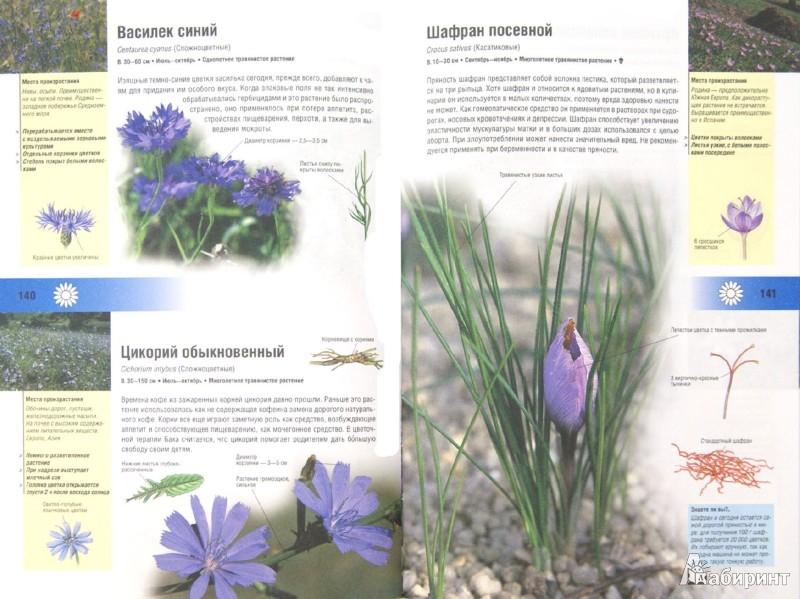 Иллюстрация 1 из 7 для Иллюстрированный травник. 350 видов лекарственных растений - Вольфганг Гензель | Лабиринт - книги. Источник: Лабиринт