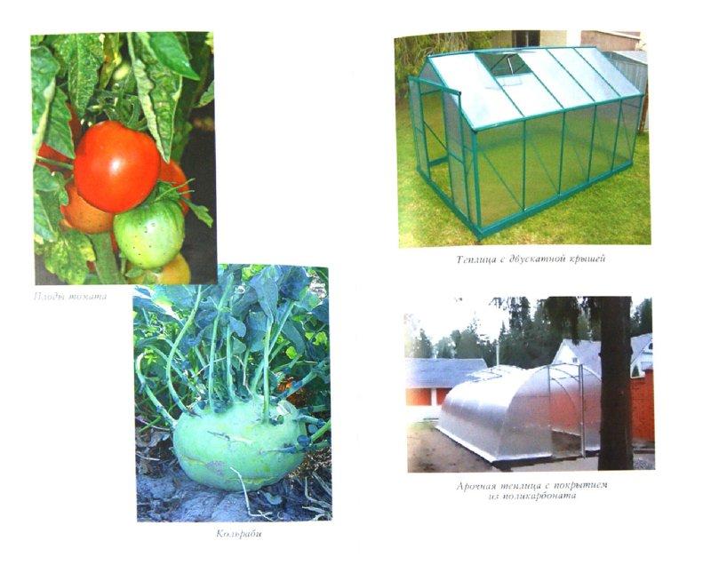 Иллюстрация 1 из 16 для Богатый урожай из парника и теплиц | Лабиринт - книги. Источник: Лабиринт