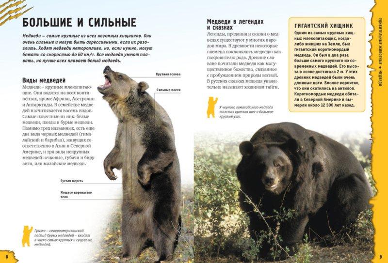 Иллюстрация 1 из 16 для Удивительные животные - Грин, Морган | Лабиринт - книги. Источник: Лабиринт
