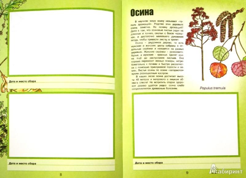 Иллюстрация 1 из 25 для Деревья и кустарники - Сергей Шустов | Лабиринт - книги. Источник: Лабиринт