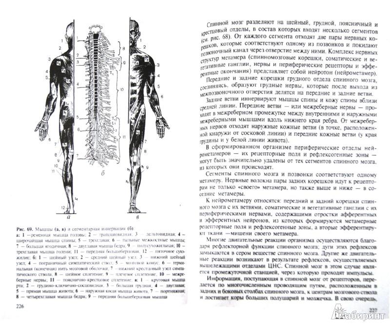 Иллюстрация 1 из 2 для Лечебный массаж - Дубровский, Дубровская | Лабиринт - книги. Источник: Лабиринт