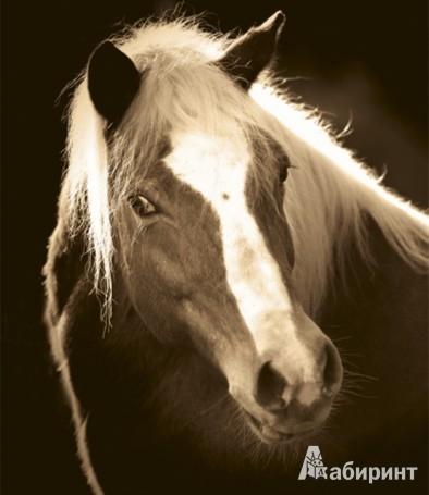 Иллюстрация 1 из 5 для Календарь 2013. Horses Dreaming/Сны о лошадях - Christiane Slawik | Лабиринт - сувениры. Источник: Лабиринт