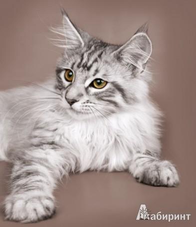 Иллюстрация 1 из 5 для Календарь 2013: Majestic Cats/Кошки | Лабиринт - сувениры. Источник: Лабиринт