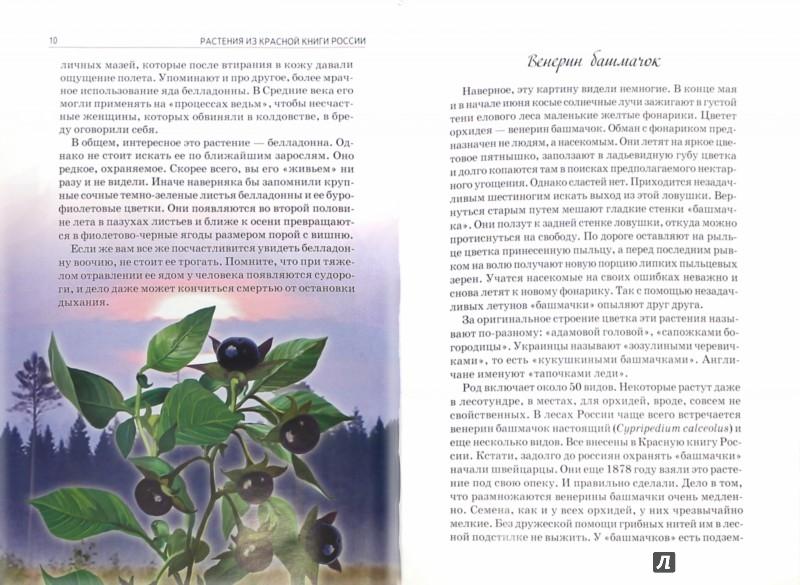 Иллюстрация 1 из 16 для Растения из Красной книги России - Юлия Дунаева   Лабиринт - книги. Источник: Лабиринт