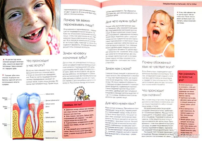 Иллюстрация 1 из 37 для Большая школьная энциклопедия в вопросах и ответах | Лабиринт - книги. Источник: Лабиринт