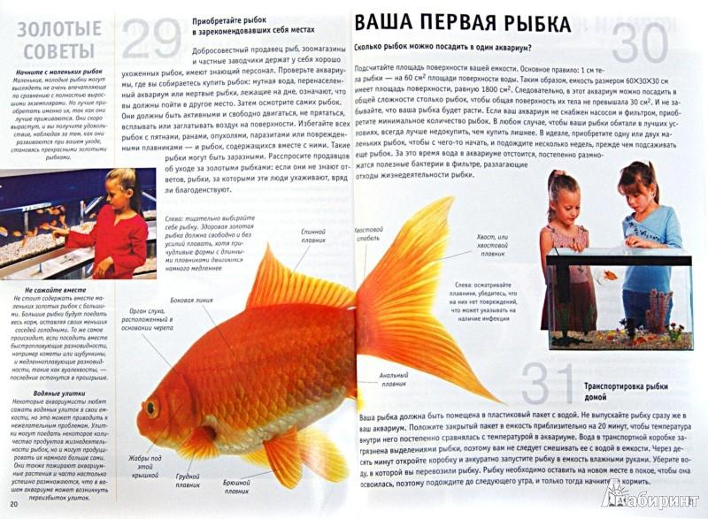 Уход и содержание золотых рыбок в домашних условиях