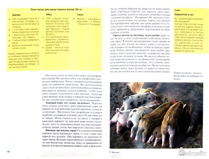 Иллюстрация 1 из 6 для Мини-пиги (декоративные свинки). Содержание и уход - Эльке Стриовски   Лабиринт - книги. Источник: Лабиринт