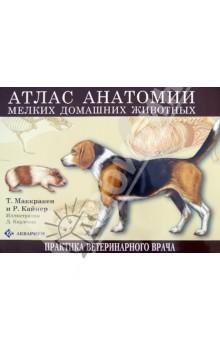 Атлас анатомии мелких домашних животныхВетеринария<br>Представленное издание является атласом по анатомии мелких млекопитающих для студентов, изучающих морфологию, ветеринарную медицину и зоологию. Отличное качество цветных иллюстраций делает атлас незаменимым учебным пособием, в котором на примере собаки, кошки, кролика, крысы и морской свинки в сравнительном аспекте приводятся сведения по анатомии всех систем органов. <br>Данное учебное пособие облегчает усвоение материала благодаря следующим принципам освещения материала: <br>- Различные системы органов описываются отдельно, представляется возможность увидеть расположение органов как одной, так и разных систем относительно друг друга , что создает целостное впечатление о всем организме. <br>- Анатомия самца и самки приводится на смежных страницах, что делает очень легким сравнительный анализ их анатомии. <br>- Общие для всех описываемых видов структуры встречаются несколько раз - на соответствующих страницах, а специфические для данного вида - только один раз, что облегчает запоминание индивидуальных особенностей анатомии каждого конкретного вида. <br>- Во введении авторы знакомят читателя с основами анатомической номенклатуры, что делает данный атлас доступным для начинающих студентов. <br>- Рисунки не перегружены деталями, акцент сделан на основные органы и их топографическую взаимосвязь, с другой стороны, атлас достаточно полно отображает анатомию мелких домашних животных.<br>
