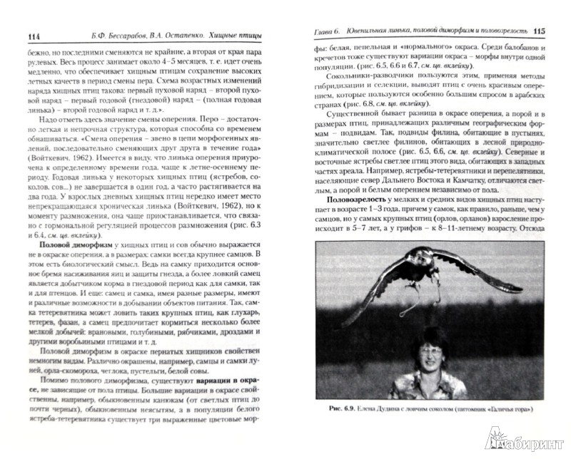 Иллюстрация 1 из 8 для Хищные птицы. Диагностика, лечение и профилактика заболеваний, методы содержания - Бессарабов, Остапенко | Лабиринт - книги. Источник: Лабиринт