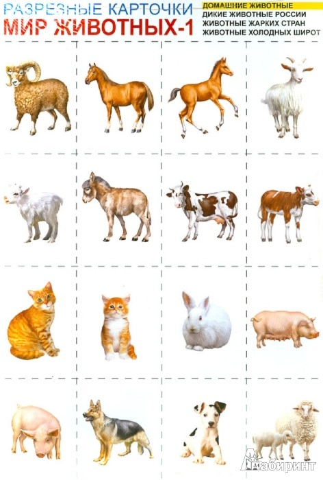 Иллюстрация 1 из 3 для мир животных 1