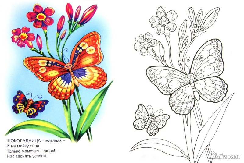 Иллюстрация 1 из 21 для Знакомимся с бабочками - Юрий Чичев | Лабиринт - книги. Источник: Лабиринт