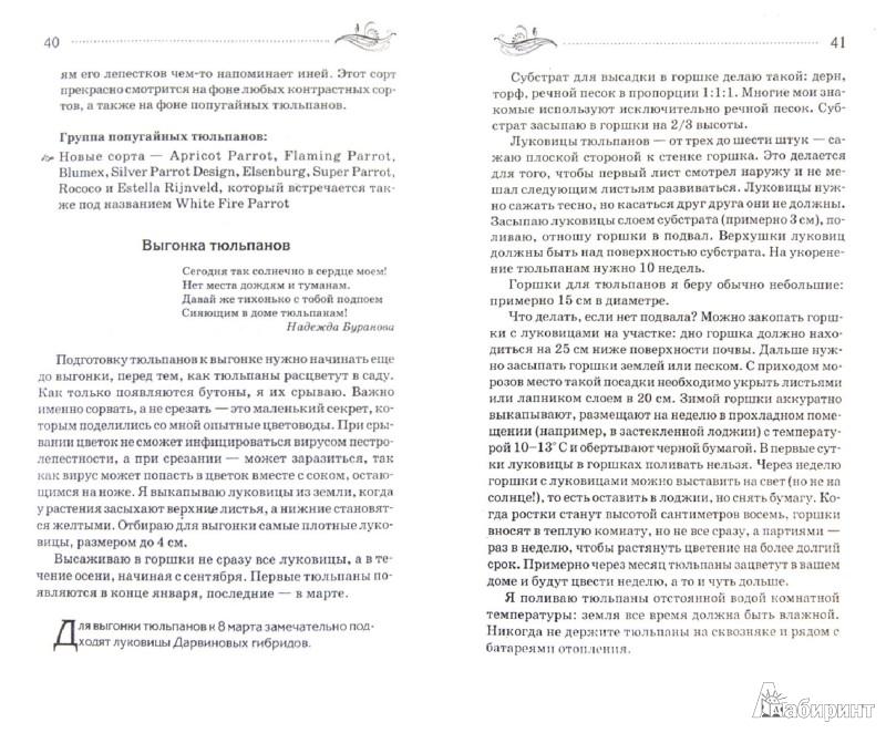 Иллюстрация 1 из 10 для Все о выращивании и выгонке луковичных растений в России - Татьяна Литвинова | Лабиринт - книги. Источник: Лабиринт