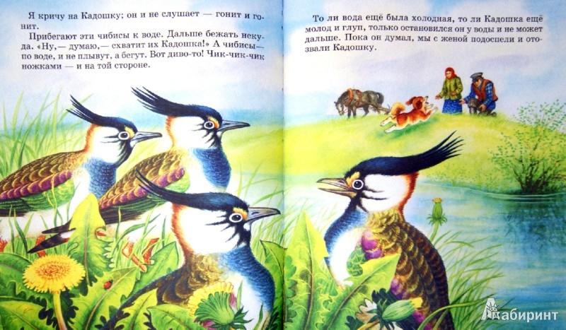 Иллюстрация 1 из 12 для Лисичкин хлеб - Михаил Пришвин | Лабиринт - книги. Источник: Лабиринт