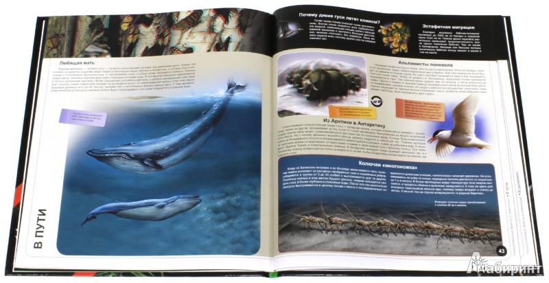 Иллюстрация 1 из 16 для Увлекательные факты о животных | Лабиринт - книги. Источник: Лабиринт