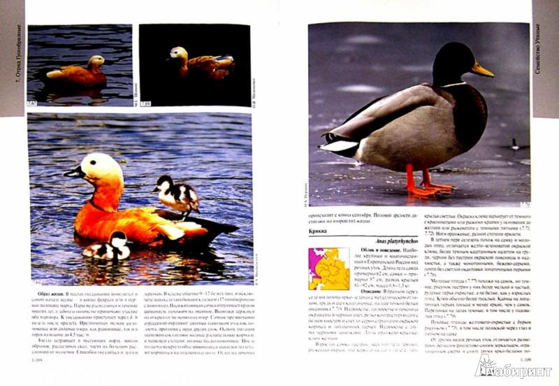 Иллюстрация 1 из 17 для Полный определитель птиц европейской части России. В 3-х книгах - Калякин, Коблик | Лабиринт - книги. Источник: Лабиринт