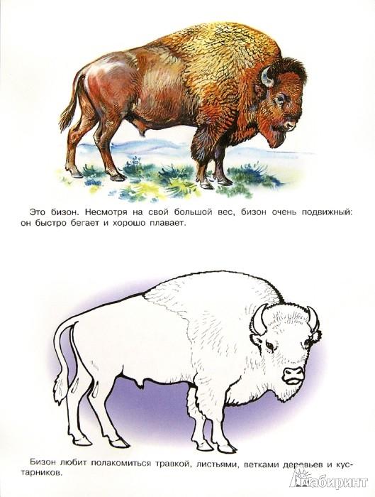Иллюстрация 1 из 8 для Раскраска. Животные Америки и Австралии | Лабиринт - книги. Источник: Лабиринт