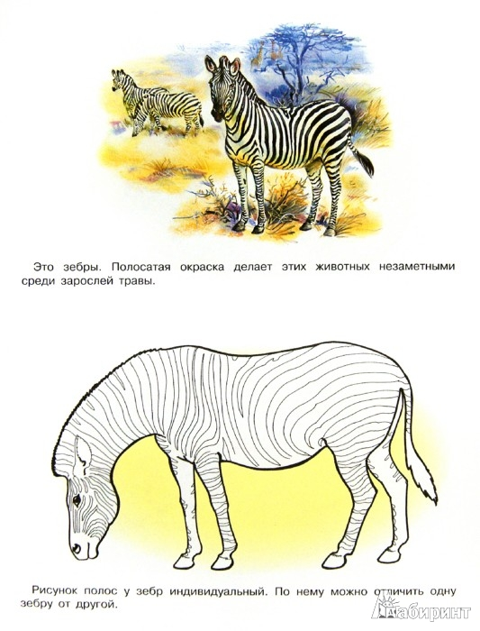 Иллюстрация 1 из 18 для Раскраска. Животные Африки | Лабиринт - книги. Источник: Лабиринт