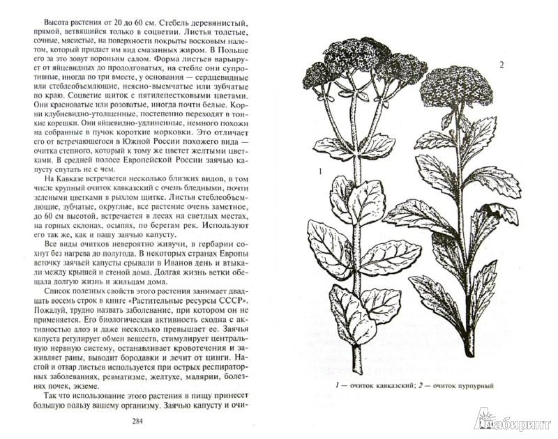 Иллюстрация 1 из 21 для Кухня Робинзона. Рецепты блюд из дикорастущих растений и цветов - Наталья Замятина | Лабиринт - книги. Источник: Лабиринт
