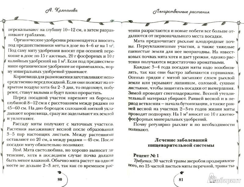 Иллюстрация 1 из 8 для Лекарственные травы на вашем участке - Анастасия Колпакова   Лабиринт - книги. Источник: Лабиринт