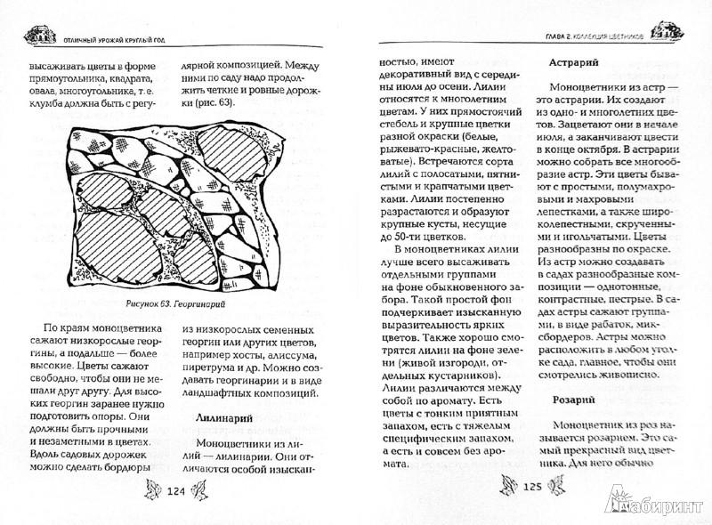 Иллюстрация 1 из 10 для Цветники в схемах - Елена Вечерина | Лабиринт - книги. Источник: Лабиринт