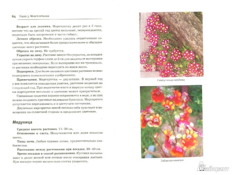 Дневник цветовода. Июль