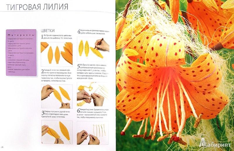 Иллюстрация 1 из 9 для Цветы и букеты из гофрированной бумаги - Агнешка Бойраковска-Пшенесло | Лабиринт - книги. Источник: Лабиринт