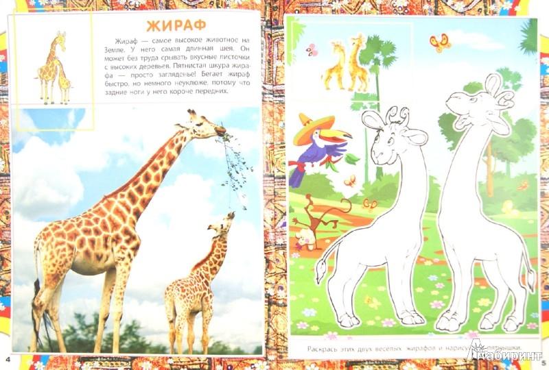 Иллюстрация 1 из 17 для AFRICA. Животный мир Африки   Лабиринт - книги. Источник: Лабиринт
