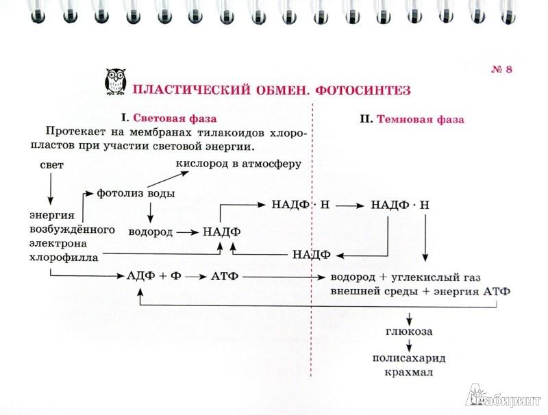 Иллюстрация 1 из 6 для Общая биология. Строение и свойства клетки - Ирина Мошкина | Лабиринт - книги. Источник: Лабиринт