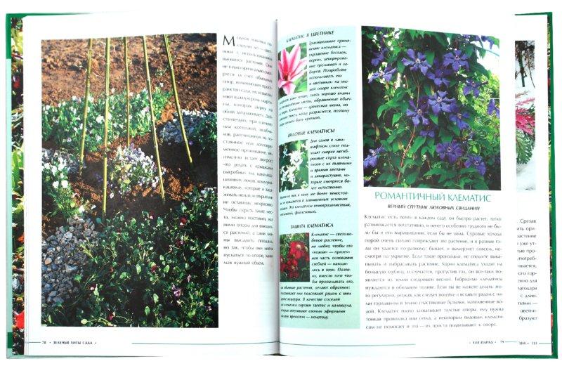 Иллюстрация 1 из 25 для Зеленые хиты сада - Ульяна Анапова | Лабиринт - книги. Источник: Лабиринт