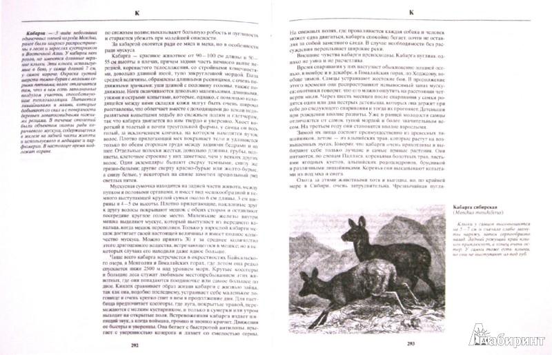 Иллюстрация 1 из 8 для Русская охота - Леонид Сабанеев | Лабиринт - книги. Источник: Лабиринт