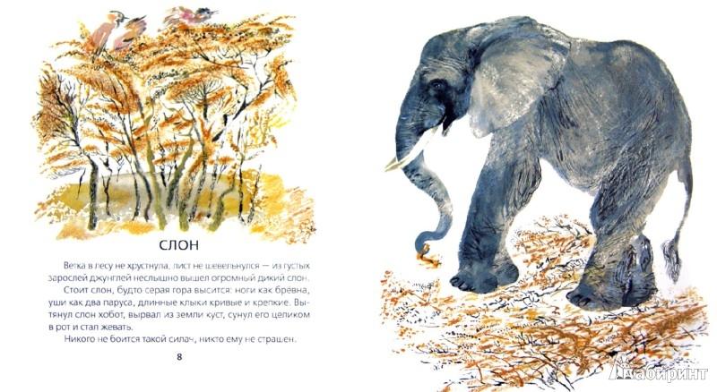 Иллюстрация 1 из 32 для Животные жарких и холодных стран - Евгений Чарушин | Лабиринт - книги. Источник: Лабиринт