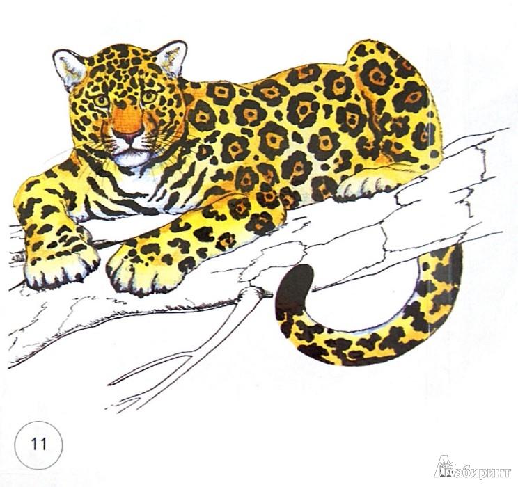"""Иллюстрация 1 из 4 для Карточки """"Дикие кошки""""   Лабиринт - книги. Источник: Лабиринт"""