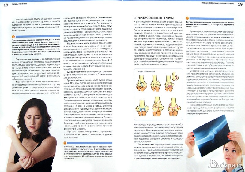 Иллюстрация 1 из 10 для Мышцы и суставы. Опорно-двигательный аппарат - Платонов, Соловьева, Касьянова | Лабиринт - книги. Источник: Лабиринт