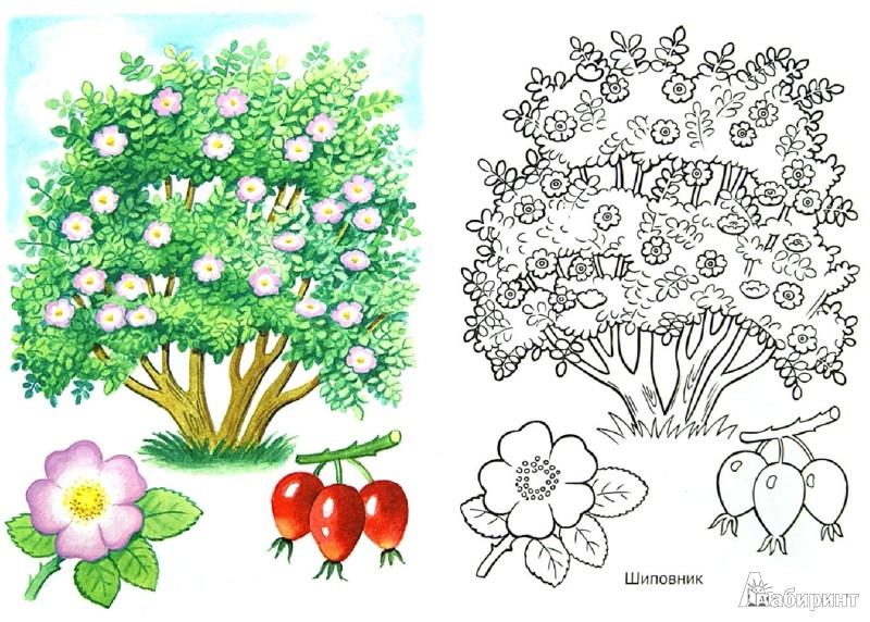 Кусты и деревья раскраски