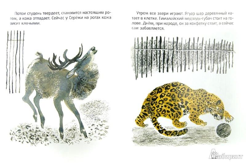 Иллюстрация 1 из 31 для В зоопарке - Евгений Чарушин | Лабиринт - книги. Источник: Лабиринт