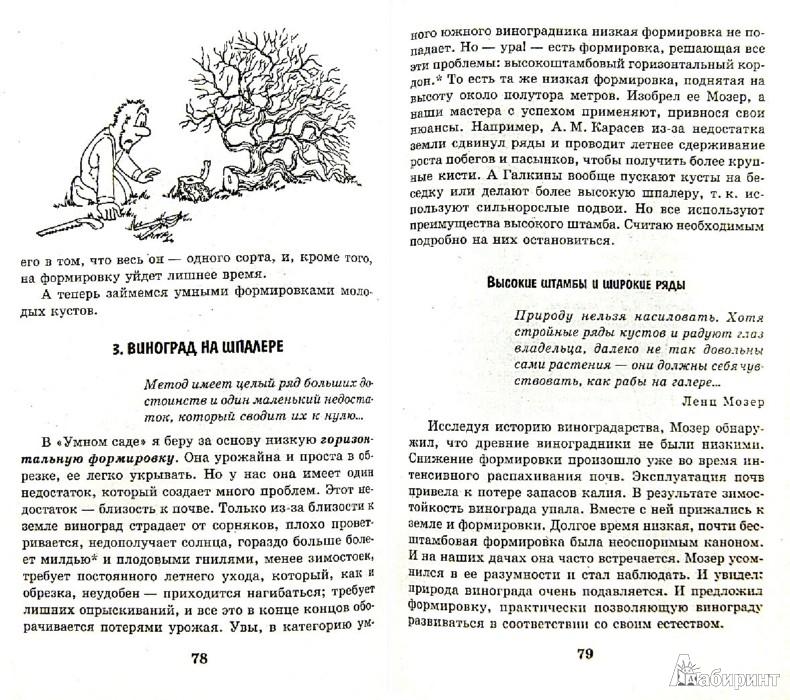 Иллюстрация 1 из 14 для Умный виноградник для себя - Николай Курдюмов | Лабиринт - книги. Источник: Лабиринт