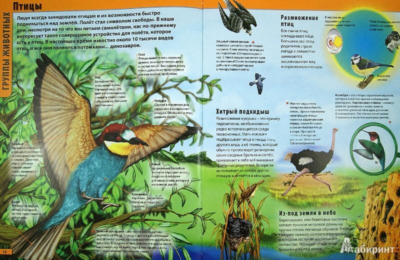 Иллюстрация 1 из 10 для Животные - Мариуш Любка | Лабиринт - книги. Источник: Лабиринт