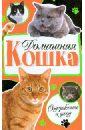 Дазидова Дарья Домашняя кошка. Содержание и уход