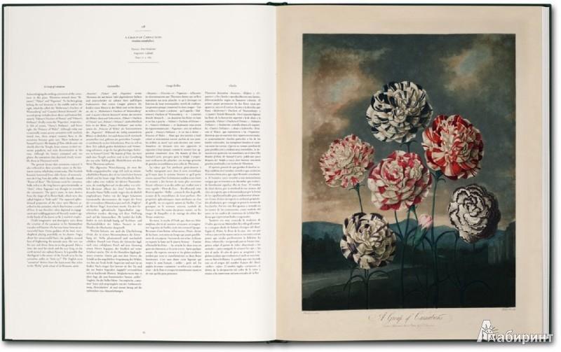 Иллюстрация 1 из 12 для Robert John Thornton. The Temple of Flora. The Complete Plates | Лабиринт - книги. Источник: Лабиринт