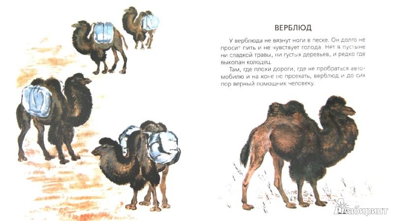 Иллюстрация 1 из 16 для Чарушинские зверята.  Комплект из 6 брошюр - Чарушин, Чарушина-Капустина | Лабиринт - книги. Источник: Лабиринт