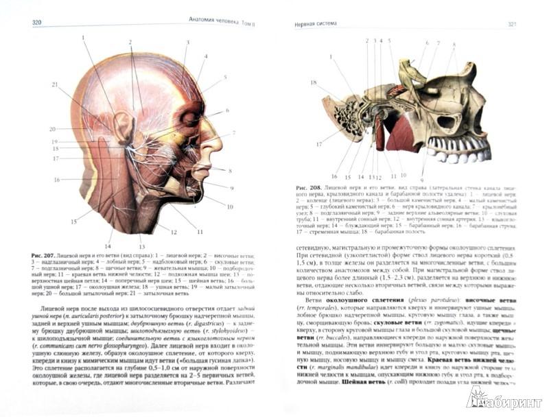 Иллюстрация 1 из 8 для Анатомия человека. Учебник. В 2-х томах. Том 2 - Сапин, Николенко, Никитюк, Чава | Лабиринт - книги. Источник: Лабиринт