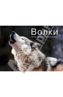 Волки. Хищные и свободные