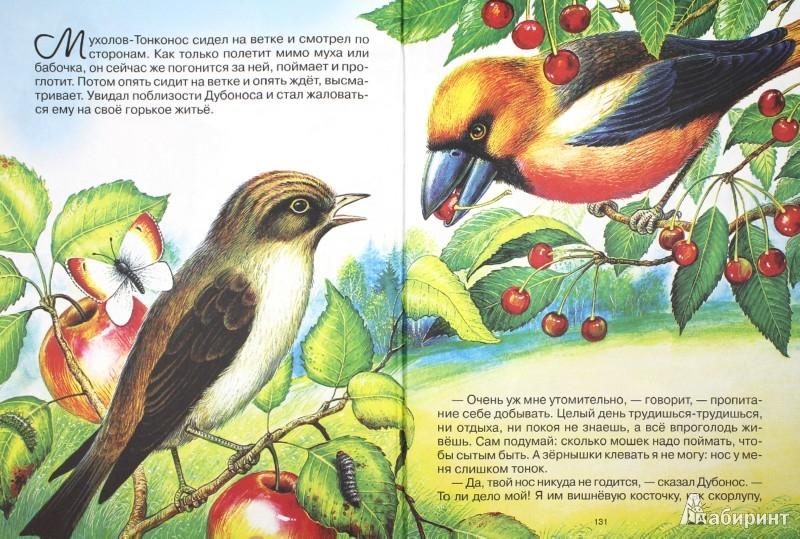 Иллюстрация 1 из 13 для Сказки о животных. Самые интересные лесные истории - Пришвин, Бианки, Сладков, Шим   Лабиринт - книги. Источник: Лабиринт