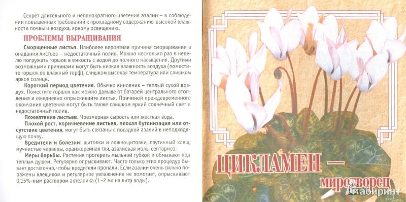 Иллюстрация 1 из 6 для Комнатные цветы-талисманы | Лабиринт - книги. Источник: Лабиринт