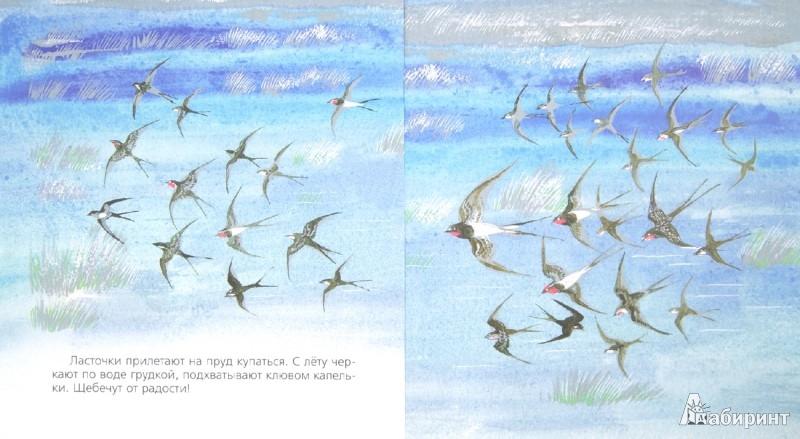 Иллюстрация 1 из 12 для Бобровый пруд - Николай Сладков | Лабиринт - книги. Источник: Лабиринт