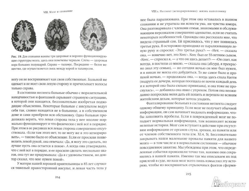 Иллюстрация 1 из 23 для Мы - это наш мозг. От матки до Альцгеймера - Дик Свааб | Лабиринт - книги. Источник: Лабиринт