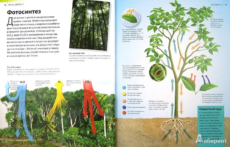 Иллюстрация 1 из 27 для Жизнь деревьев | Лабиринт - книги. Источник: Лабиринт