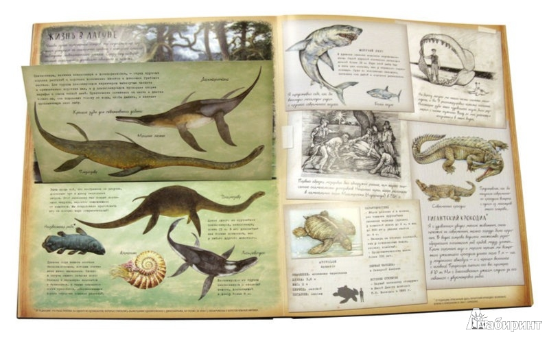 Иллюстрация 1 из 19 для Динозавроведение. Поиски затерянного мира   Лабиринт - книги. Источник: Лабиринт
